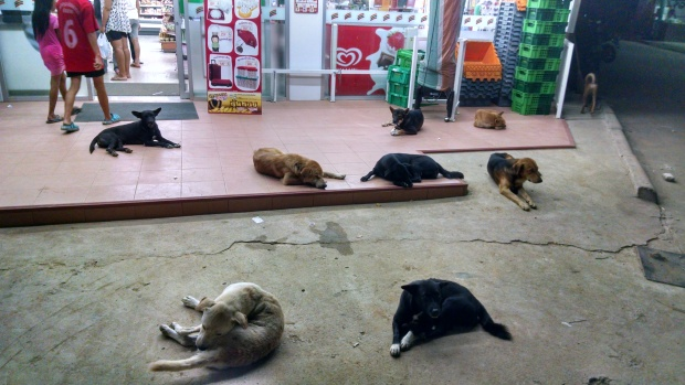 9 stray dogs at the 7/11.  What is this world coming to?
